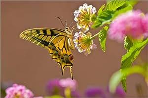 Póster 60 x 40 cm: Butterfly de pahit - impresión artística de alta calidad, nuevo póster artístico