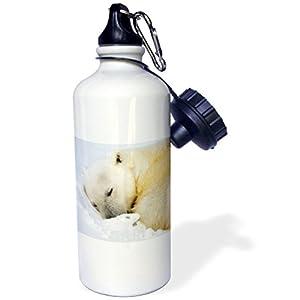 3dRose wb_82451_1 Norway, Svalbard, Spitsbergen Island, Polar Bear-EU21 PSO0391-Paul Souders Sports Water Bottle, 21 oz, White