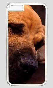 Cat Sleeping Under The Dog Ear DIY Hard Shell Transparent Best Designed iphone 5 5s Case