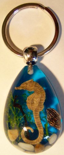 Real Seahorse keychain (blue)