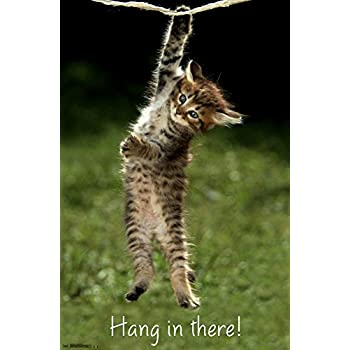 hang in there cat poster printed on premium cardstock paper sized 11 x 14 inch. Black Bedroom Furniture Sets. Home Design Ideas