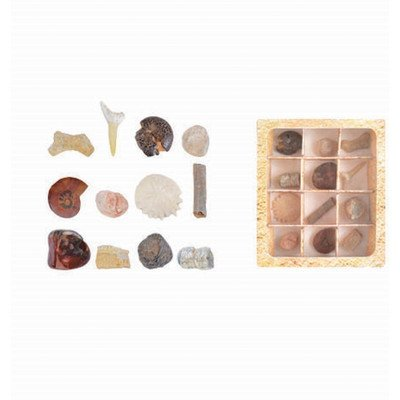 Fallen Fruits Fossils Collection in Gift Box