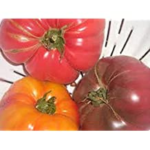 Organic Rare heirloom Brandywine Trio Variety pack tomato Seeds(30 seeds/pack) red,yellow and black! sweet large tomatoes!