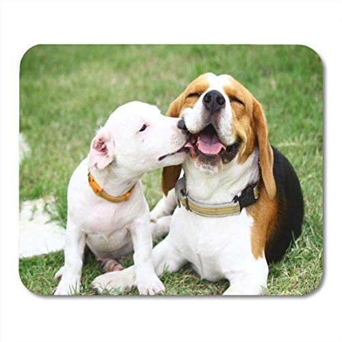 Jack Russell Beagle - Mouse Pad Cute Beagle and Jack Russell Dog Pet Animal Doggy Mousepad for Notebooks,Desktop Computers Mouse Mats, Office Supplies