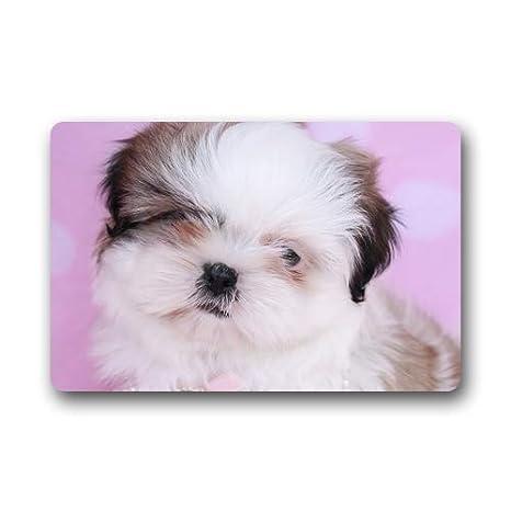 Amazoncom Teacup Shih Tzu Puppies Baby Custom Doormats Rug Non