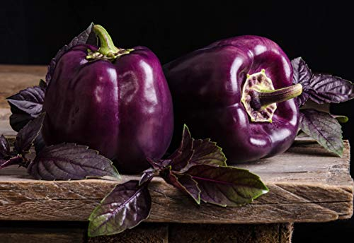 - Sweet Pepper Purple Bell Seeds Oda Vegetable for Planting Giant Organic Non GMO 30 Seeds