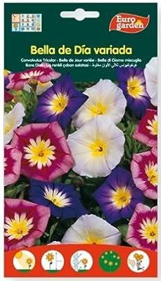 Semillas flores bella de día variada. Pack 2 sobres: Amazon.es: Jardín