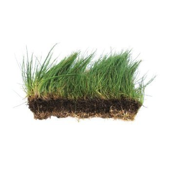 Dwarf Hairgrass on 3 x 5 mat - Foreground Carpet Aquarium Plant