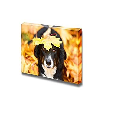 Cute Black Border Collie Dog with a Maple Leaf on The Head Beautiful Autumn View - Canvas Art Wall Art - 12