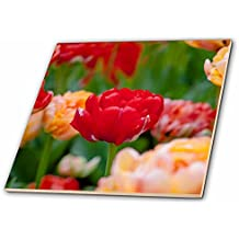 3dRose Alexis Photography - Flowers Tulip - Red parrot tulip, green and colorful background. Joy of spring - 12 Inch Ceramic Tile (ct_273881_4)