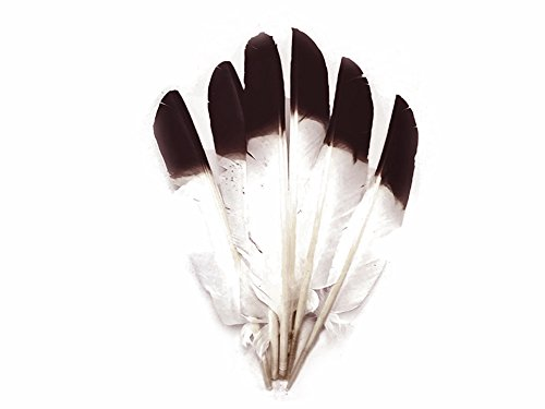 - Moonlight Feathers | 1/4 Lbs - Turkey Wing Pointer Quill Feathers Brown Tipped Primary Wing Wholesale Feathers (Bulk) Halloween, Headdress, Craft Feathers