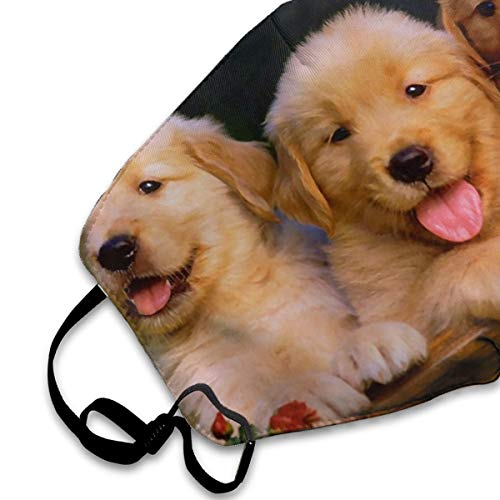 NOT Cute Puppies Golden Retriever Personality Lovely Unisex Dust Mask, Suitable for Young Men and Women, Ski Bike Camping Windproof Motorcycle Face Mask