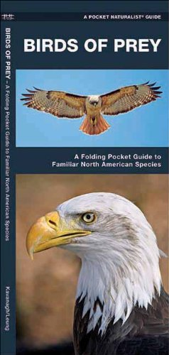 Birds of Prey: A Folding Pocket Guide to Familiar North American Species (Pocket Naturalist Guide Series)