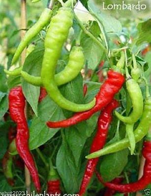 italian pepperoncini - 4