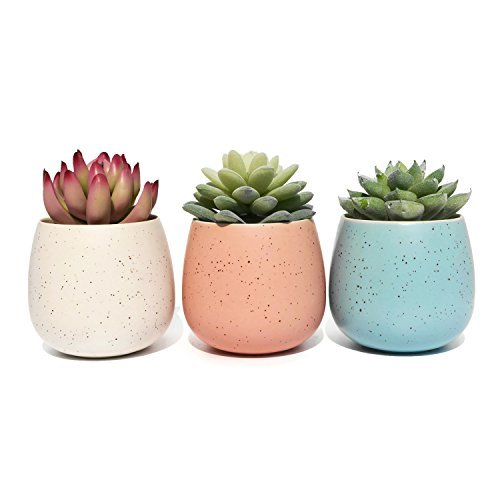 Succulent Planter Pot - Set of 3 - Assorted White Blue and Pink Ceramic Decorative Small Flower Plant Pot with Drainage - Home Office Desk Garden Mini Cactus Pot Indoor Decoration ()