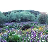 Search : California Wildflower Mix 1,000+ Seeds No Filler by Seeds and Things