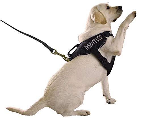 41qLpbWBI5L - Biothane K9 Working Dog Leash