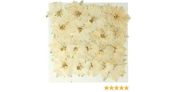 Amazon Silver J Pressed Real Dried Flowers White Larkspur