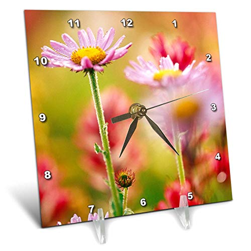 (3dRose Danita Delimont - Flowers - Alpine Aster, Mt. Rainier National Park, Washington State, USA - 6x6 Desk Clock (dc_315194_1))