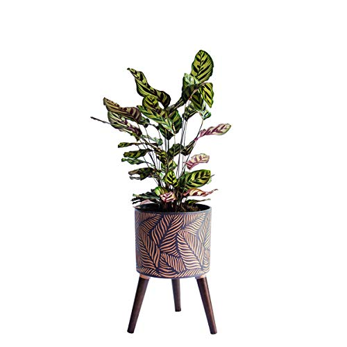 11 inch pot - 4
