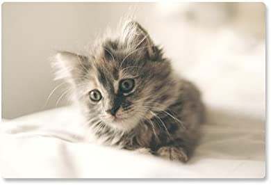 """Rutschfeste Design-Schreibunterlage """"Kleines Kätzchen"""" 60 x 40 cm, aus DA-Media in Premium-Qualität, Malunterlage, Schreibtischauflage, Schreibtischunterlage"""