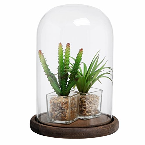 Decorative clear glass cloche bell jar display case with