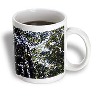 WhiteOak Photography Nature Scenes - A photo taken straight up of hardwood trees - 11oz Mug (mug_77141_1)