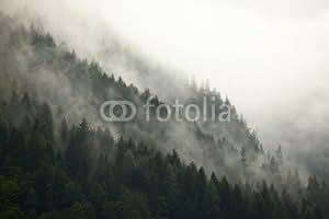 Forest Fog (51427106), lino, 80 x 50 cm