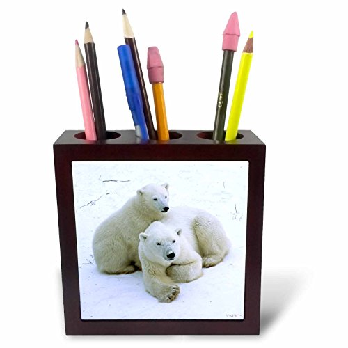 Churchill Tile (3dRose ph_45685_1 Polar Bear mother and cub.(Ursus maritimus).Churchill, Canada-Tile Pen Holder, 5