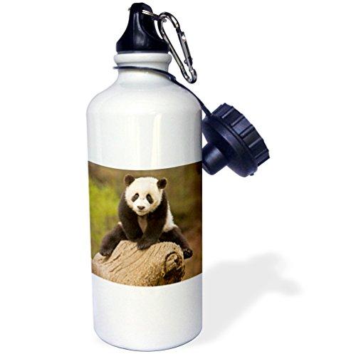 Wolong Panda Reserve China - 3dRose wb_70238_1 China, Wolong Panda Reserve, Baby Panda Bear on Stump-As07 Aga0001-Alice Garland Sports Water Bottle, 21 oz, White