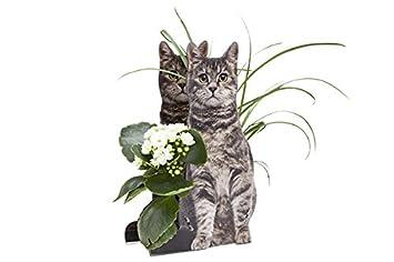 Amazon De 3d Gluckwunsch Verpackung Katze Tolle Geschenkidee Fur