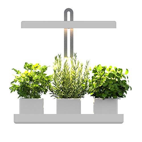 The 10 best hydroponic herb garden for kitchen 2020