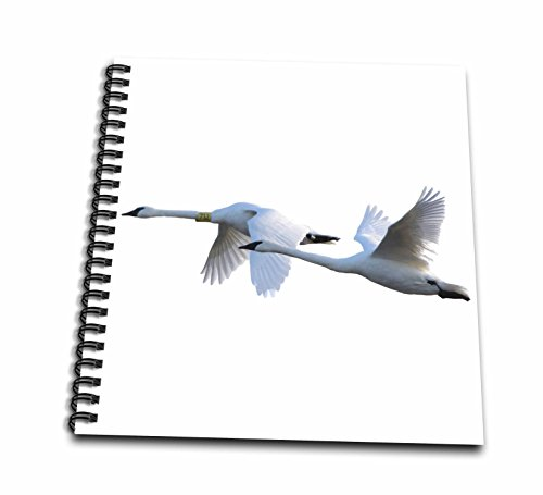 ns in Flight on White Background, Marion Co, Illinois Drawing Book, 12 x 12