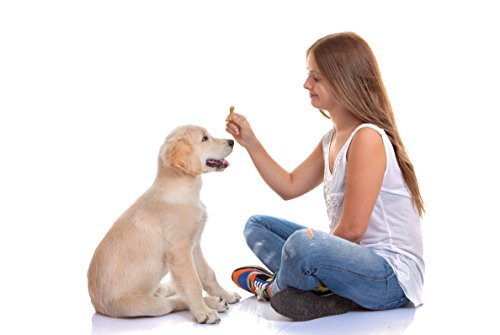 Dog Training Clicker Ebook Free