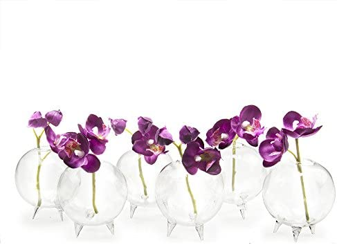 189 & Chive - Set of 6 Small Clear Glass Bud Vase for Short Flowers Unique Low Sitting Flower Vase Cute Floral Vase for Home Decor Weddings Floral ...