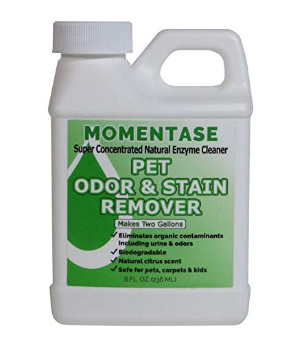 Concentrate Enzyme (Momentase Natural Enzyme Cleaner Concentrate High Strength Pet Odor & Stain Remover Non-Toxic Makes 2 Gallons of Solution for Dog & Cat Urine, Feces, Vomit, Organic Soils)