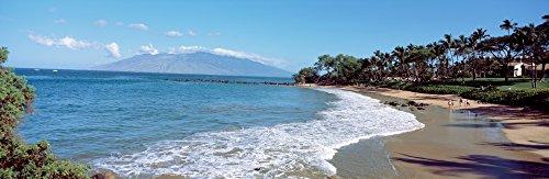Trees on the beach Molokai Maui Hawaii USA Poster Print (36 x 12) (Best Beaches On Molokai)