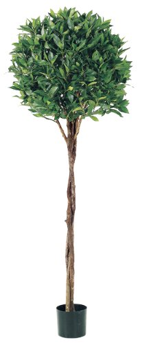 Allstate Floral & Craft Bay Leaf Topiary Plant with Braided Trunk, 5-Feet