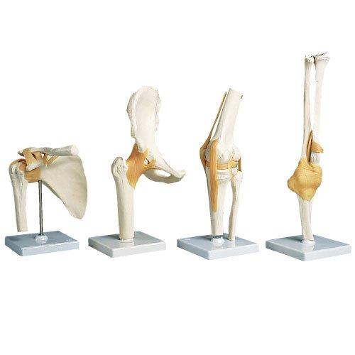 膝関節モデル(台付) A82 (12X12X34cm)   B010AOF6F4