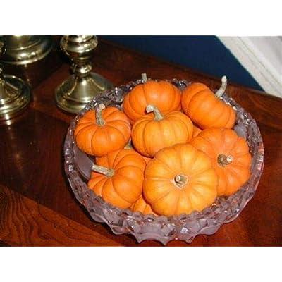 Grandiosy Pumpkin Jack BE Little Kids Delight Fall Decor : Garden & Outdoor