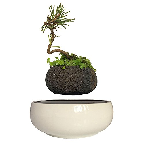 High Tech Gadgets Magnetic Levitation Air Bonsai Ceramic Garden Pots Plant Pots Bonsai Pots Birthday Gifts for Men (volcanic stone pot)