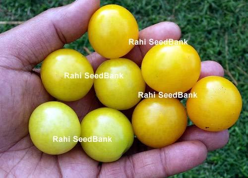 AGROBITS Pino tomate cherry - Un sabor a fruta dulce con ...