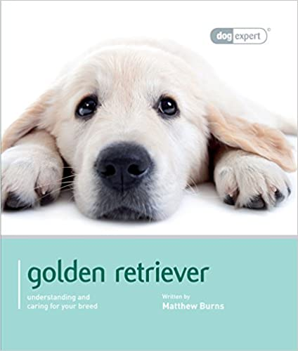 Golden Retriever - Dog Expert
