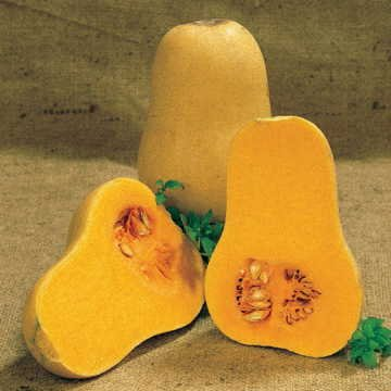 Park Seed Early Butternut Hybrid Winter Squash Seeds ()