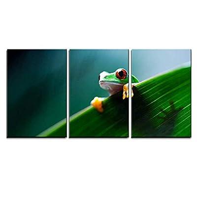 Red Eye Tree Frog on Leaf x3 Panels