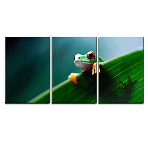 - wall26 - 3 Piece Canvas Wall Art - Red Eye Tree Frog on Leaf - Modern Home Decor Stretched and Framed Ready to Hang - 16