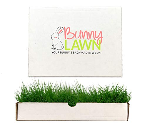 - Bunny Lawn Fresh Grass Mat for Your Rabbit, 12 x 9