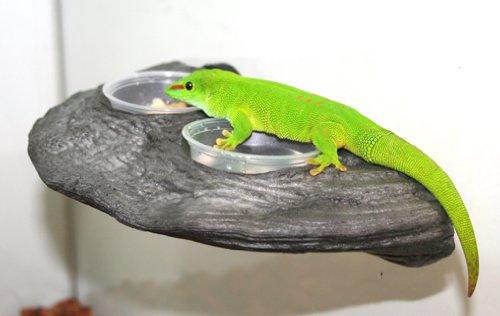 Magnaturals Gecko Ledge Granite - Magnetic Decor by Magnaturals