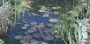 Über 25 Teichpflanzen, 10 Sorten Mit Seerose: Amazon.de: Haustier Gartenteich Mit Seerosen Sorten
