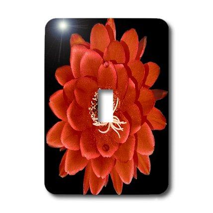 3dRose LLC lsp_32364_1 Decorative Colorful Garden Botanic Classic Plant Sw Southwest Desert Cactus Red Black Flower Single Toggle Switch by 3dRose